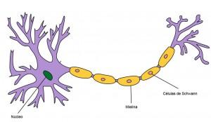 neurónio1